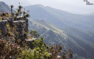 Jihoafrická republika: Buddy, co jel původně jinam, a místo divokých koní
